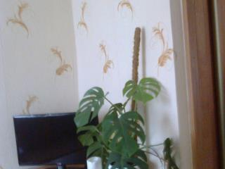 Продажа квартир: 2-комнатная квартира, Ростов-на-Дону, ул. Щаденко, фото 1